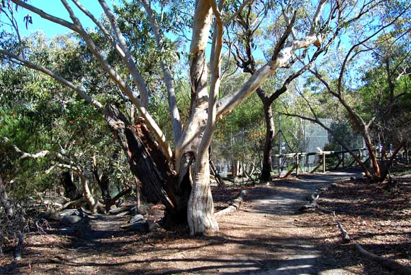 park-trees