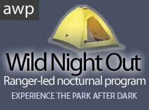 Wild Night Out Camping at Australia Wildlife Walkabout Park