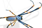 orb spider thmb